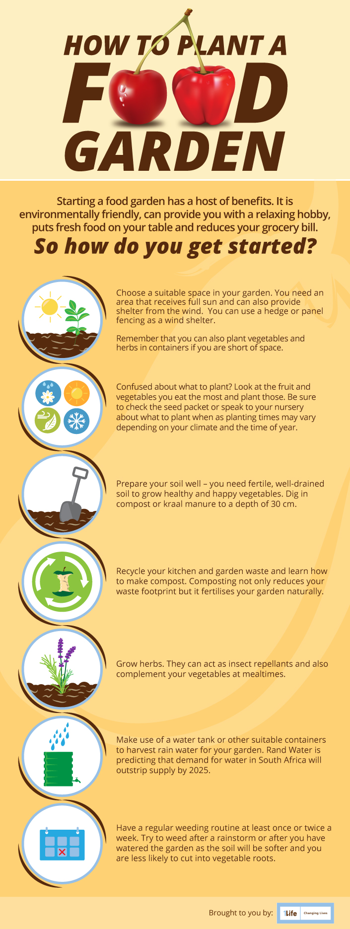 Plant a food garden infographic